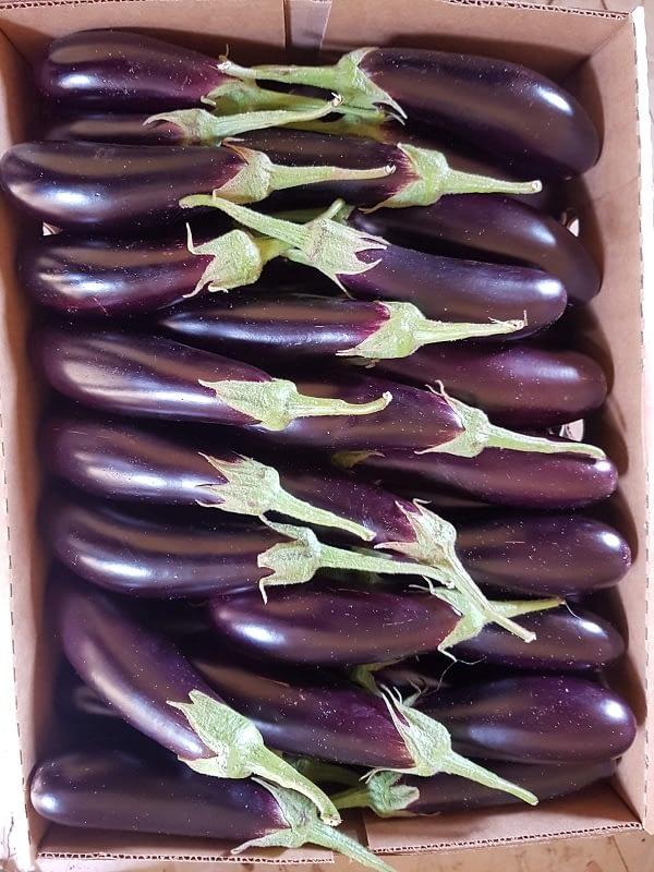 Mofarm Fresh Fruits Exporters
